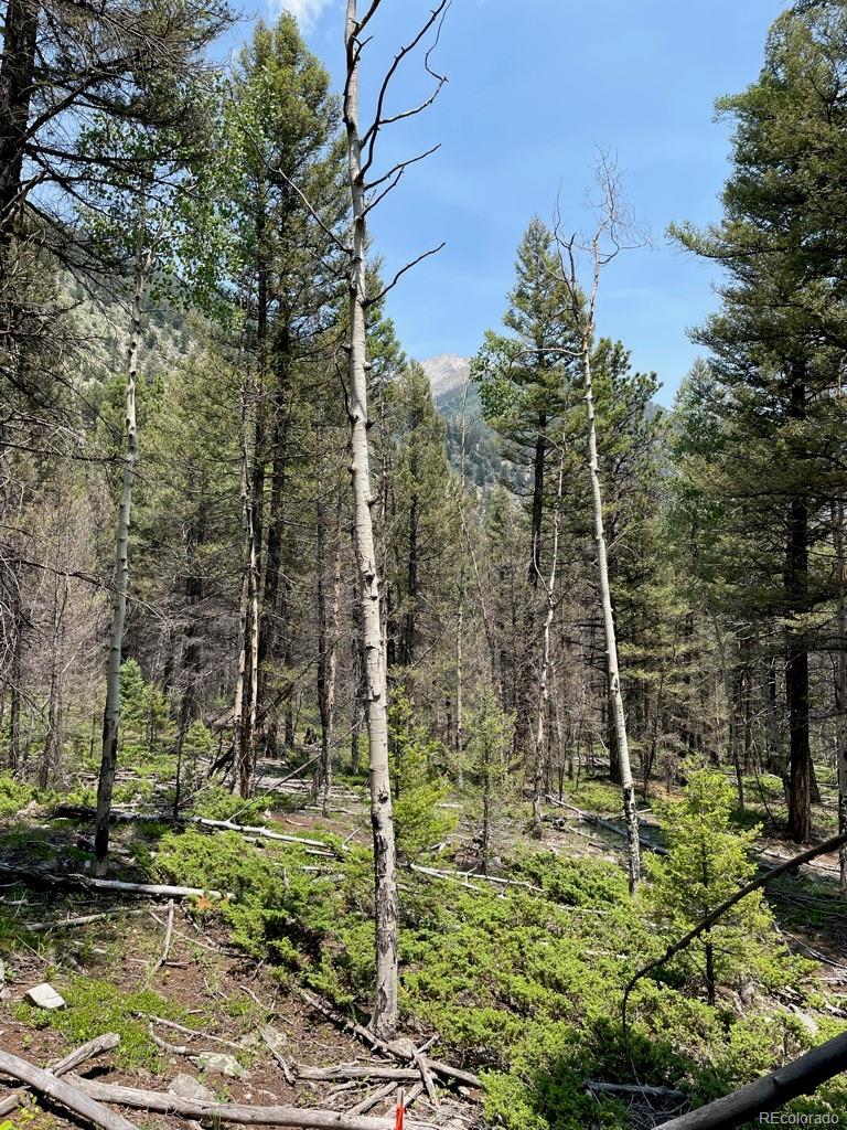 Judah, Alpine, CO